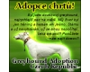 Adopce chrt  ps Greyhounds