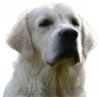 Výcviková škola pro psy Alanshop