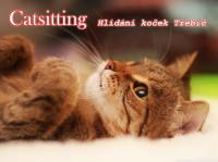 Hlídání koček / Catsitting Třebíč