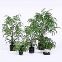 Sharetrade Artificial Plant and Tree Co., Ltd