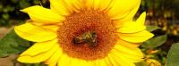 Včelařský svět – Michal Spurný