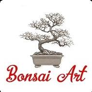 Krásne a kvalitné bonsaje a veľa iného k bonsajom - Bonsai Art