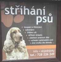 Milena Kozáková – úpravy a stříhaní psů všech ras