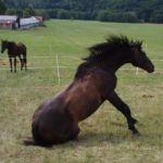 Jezdecká stáj Elvis