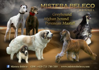 MISTERA BELECO KENNEL