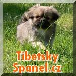 Tibetský španěl